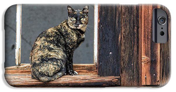 Texture iPhone Cases - Cat in a Window iPhone Case by Scott Warner