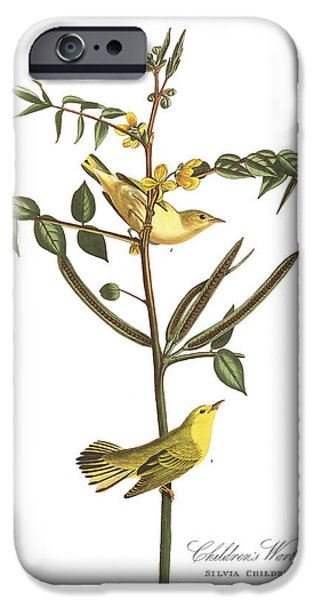 Botanical Drawings iPhone Cases - Childrens Warbler iPhone Case by John James Audubon
