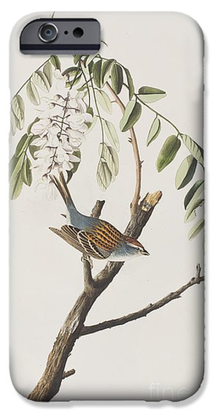 Sparrow iPhone Cases - Chipping Sparrow iPhone Case by John James Audubon