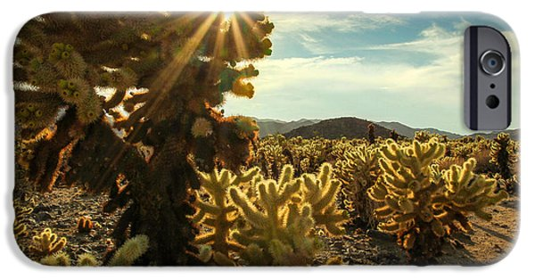 Sunflare iPhone Cases - Cholla Garden iPhone Case by Jackie Novak