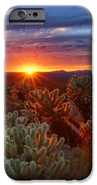 Raining iPhone Cases - Cholla Sunset  iPhone Case by Saija  Lehtonen