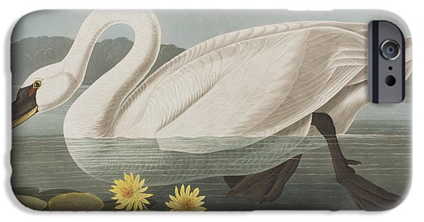 Swans... iPhone Cases - Common American Swan iPhone Case by John James Audubon