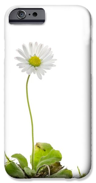 Cut-outs iPhone Cases - Common Daisy Flower iPhone Case by Duncan Shaw