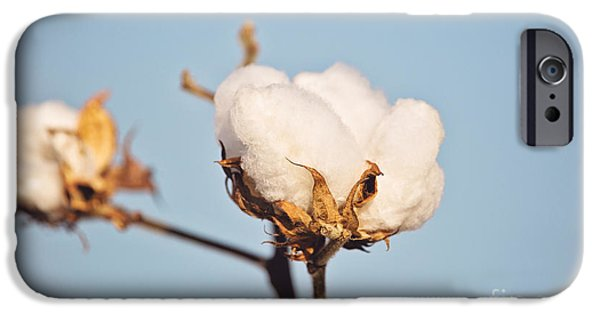 Arkansas iPhone Cases - Cotton Boll iPhone Case by Scott Pellegrin