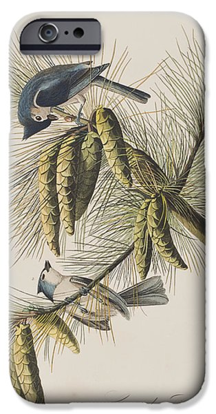 Pines Drawings iPhone Cases - Crested Titmouse iPhone Case by John James Audubon
