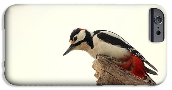 Animal Picture iPhone Cases - Curious Woodpecker  iPhone Case by Heike Hultsch