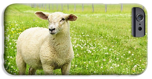Rural iPhone Cases - Cute young sheep iPhone Case by Elena Elisseeva