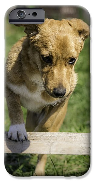 Puppy Digital Art iPhone Cases - Dog iPhone Case by Balazs Szalai