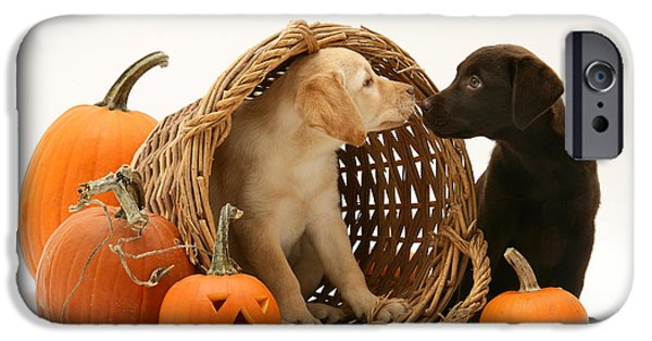 Chocolate Lab iPhone Cases - Dogs In Basket With Pumpkins iPhone Case by Jane Burton