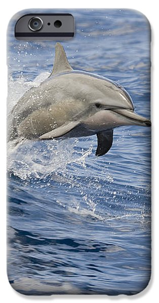 Dolphins Leaping iPhone Case by Dave Fleetham - Printscapes