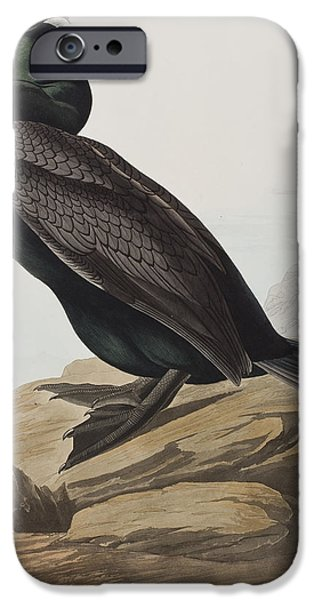 Sea Birds Drawings iPhone Cases - Double-crested Cormorant  iPhone Case by John James Audubon
