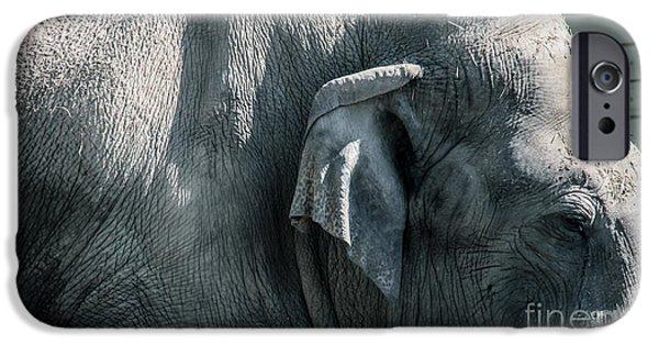 Elephants iPhone Cases - Elephant iPhone Case by Olga Photography