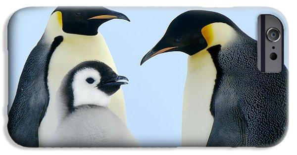 Baby Bird iPhone Cases - Emperor Penguin Aptenodytes Forsteri iPhone Case by Jan Vermeer