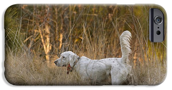 Setter Pointer iPhone Cases - English setter on point iPhone Case by Chip Laughton