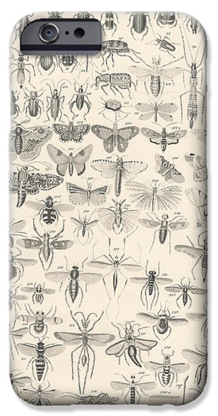Botanical Drawings iPhone Cases - Entomology iPhone Case by Captn Brown