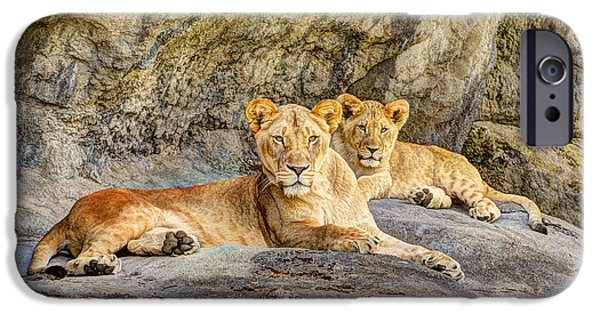 Ledge iPhone Cases - Female Lion and Cub iPhone Case by Marv Vandehey