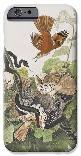 Snake Drawings iPhone Cases - Ferruginous Thrush iPhone Case by John James Audubon
