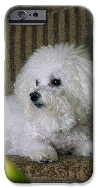Fifi the Bichon Frise  iPhone Case by Michael Ledray