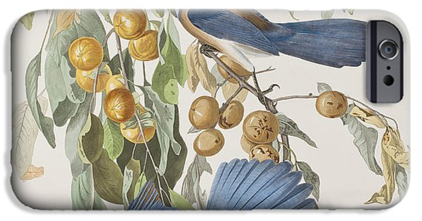 Fruit Tree iPhone Cases - Florida Jay iPhone Case by John James Audubon