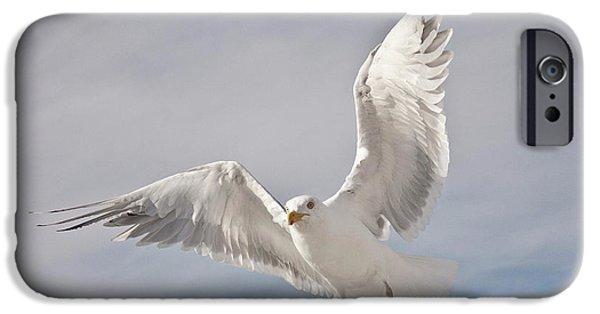 Herring Gull iPhone Cases - Flying European Herring Gull iPhone Case by Heiko Koehrer-Wagner