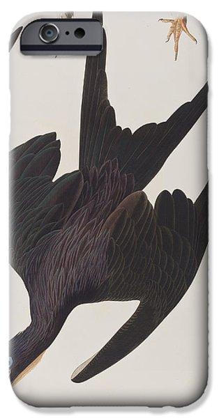 Flight Drawings iPhone Cases - Frigate Pelican iPhone Case by John James Audubon