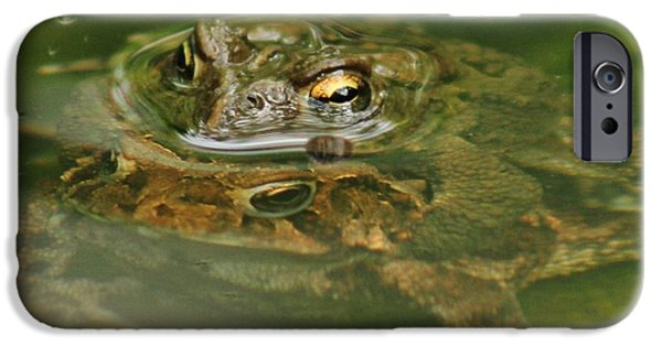 Couple Pyrography iPhone Cases - Frogs Mating iPhone Case by Valia Bradshaw