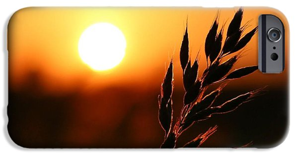 Crops iPhone Cases - Golden Sunset iPhone Case by Franziskus Pfleghart