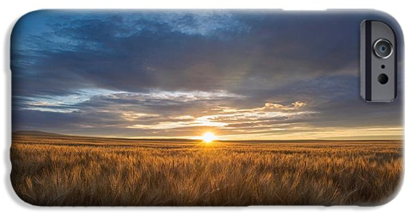 Prescott iPhone Cases - Golden wheat iPhone Case by Lynn Hopwood