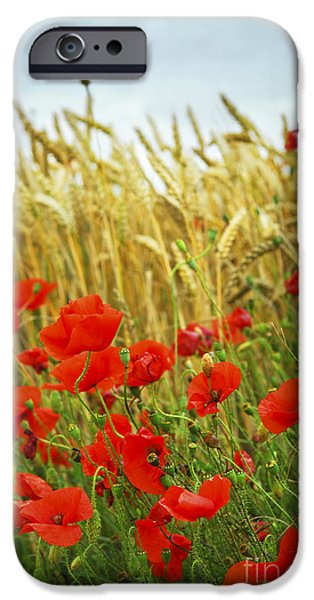 Crops iPhone Cases - Grain and poppy field iPhone Case by Elena Elisseeva