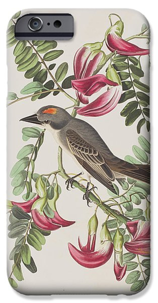 Animals Drawings iPhone Cases - Gray Tyrant iPhone Case by John James Audubon