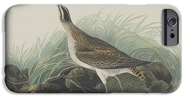Seagull Drawings iPhone Cases - Great Esquimaux Curlew iPhone Case by John James Audubon