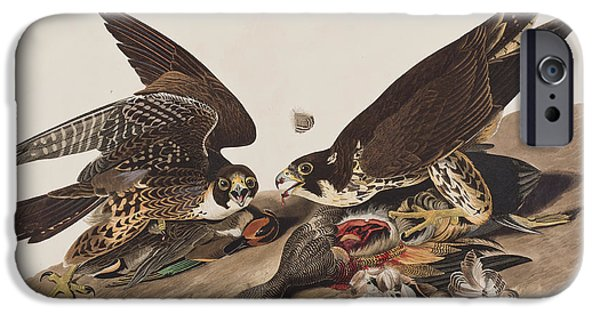 Falcon iPhone Cases - Great-footed Hawk iPhone Case by John James Audubon