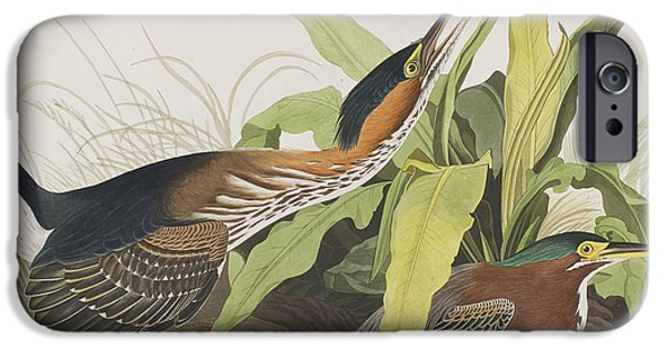 Animals Drawings iPhone Cases - Green Heron iPhone Case by John James Audubon