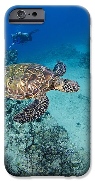 green sea turtles  iPhone Case by Dave Fleetham - Printscapes