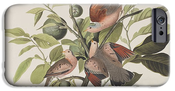 Lime iPhone Cases - Ground Dove iPhone Case by John James Audubon