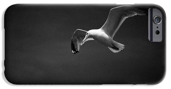 Flying Seagull iPhone Cases - Gull iPhone Case by Nigel Bangert