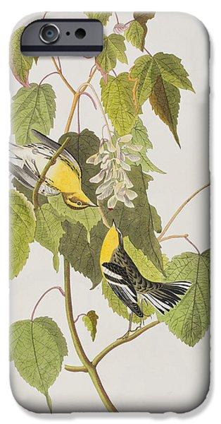 Botanical Drawings iPhone Cases - Hemlock Warbler iPhone Case by John James Audubon