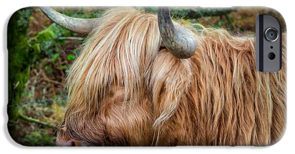 Highlands Digital iPhone Cases - Highland Cow iPhone Case by Adrian Evans