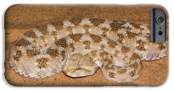 Serpent iPhone Cases - Horned Viper Cerastes Cerastes iPhone Case by PhotoStock-Israel