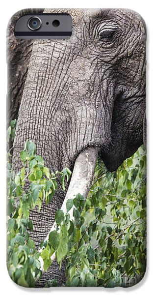 Power iPhone Cases - Huge African elephant bull in the Tarangire National Park, Tanza iPhone Case by Mariusz Prusaczyk
