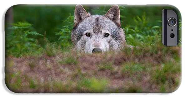 Timber Wolf Pictures iPhone Cases - I See You iPhone Case by Michael Cummings