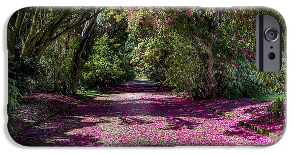 Pathway iPhone Cases - In the Pink  iPhone Case by Martina Fagan