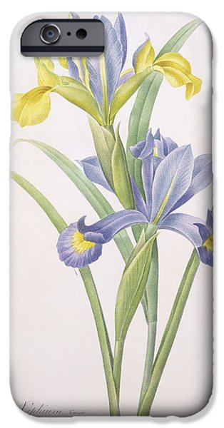 Plant Drawings iPhone Cases - Iris xiphium iPhone Case by Pierre Joseph Redoute