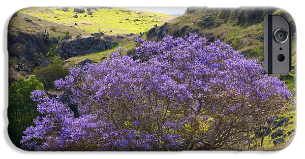 Jacaranda Tree iPhone Cases - Jacaranda Tree iPhone Case by Ron Dahlquist - Printscapes