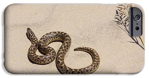 Serpent iPhone Cases - Javelin Sand Boa Eryx Jaculus iPhone Case by PhotoStock-Israel