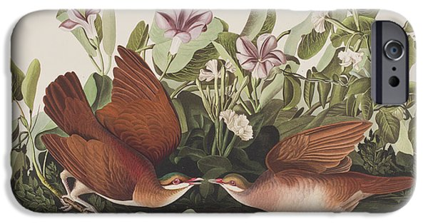 Feather Drawings iPhone Cases - Key West dove iPhone Case by John James Audubon