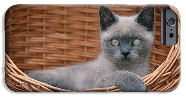 Gray Hair iPhone Cases - Kitten In A Basket iPhone Case by Johan De Meester