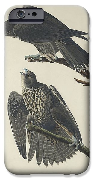 Falcon iPhone Cases - Labrador Falcon iPhone Case by John James Audubon