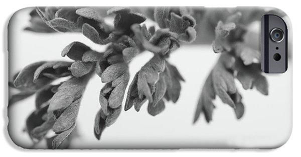 Wintertime iPhone Cases - Leaf iPhone Case by Gabriela Insuratelu