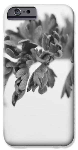 Leaf iPhone Case by Gabriela Insuratelu